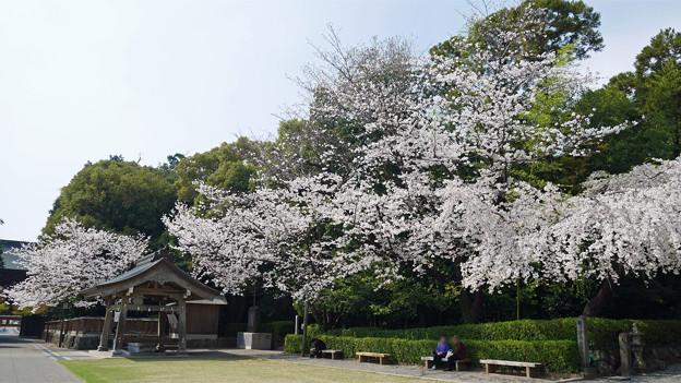 健軍神社(17)