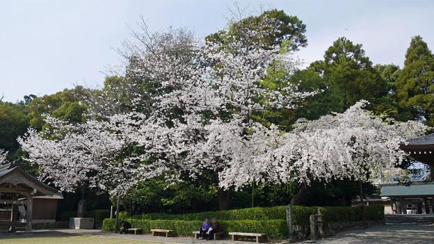 健軍神社(16)