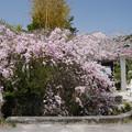 写真: 光蔵寺(2)