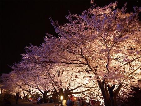 サンレイクかすやの夜桜 (10)