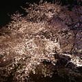 写真: サンレイクかすやの夜桜 (8)