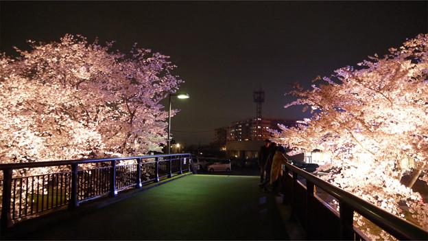 サンレイクかすやの夜桜 (7)
