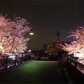 写真: サンレイクかすやの夜桜 (7)