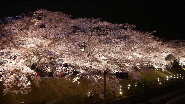 サンレイクかすやの夜桜 (6)