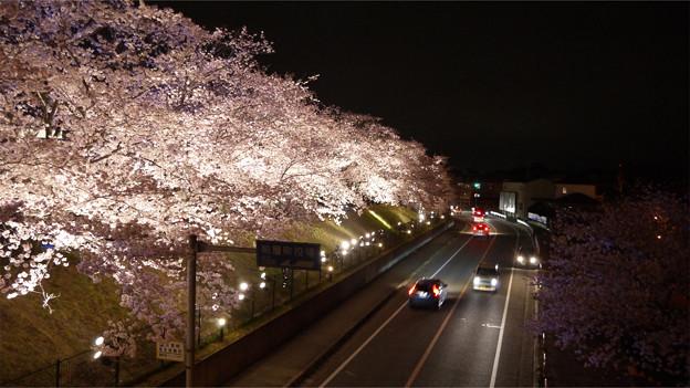 サンレイクかすやの夜桜 (5)