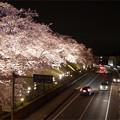 写真: サンレイクかすやの夜桜 (5)