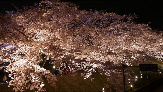サンレイクかすやの夜桜 (4)