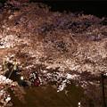 写真: サンレイクかすやの夜桜 (4)