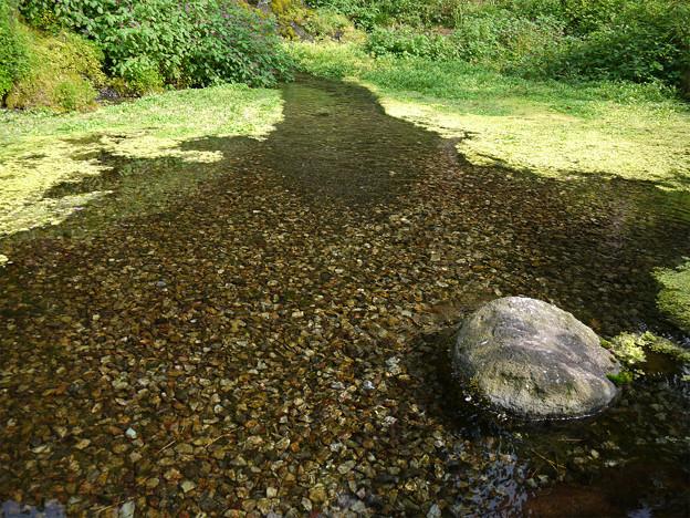老野湧水の滝 (6)