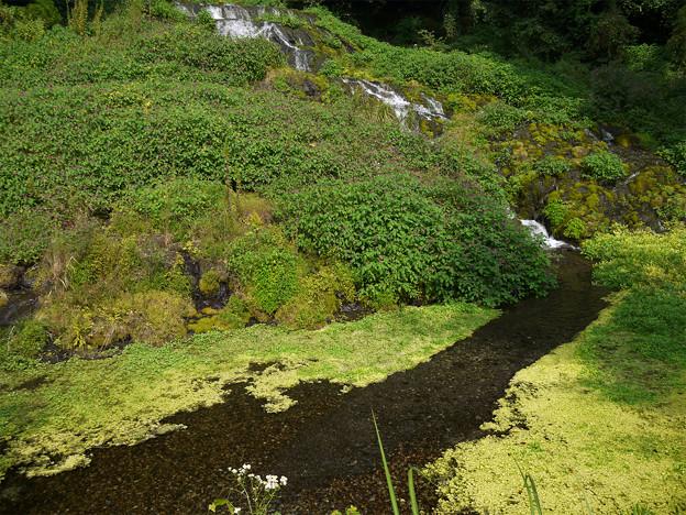 老野湧水の滝 (5)