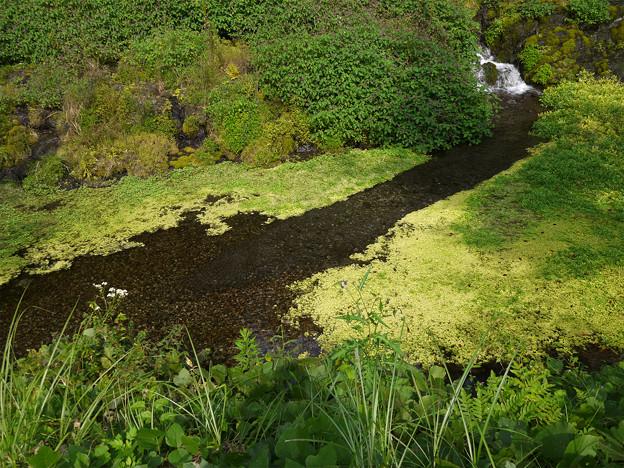 老野湧水の滝 (4)