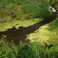 写真: 老野湧水の滝 (4)