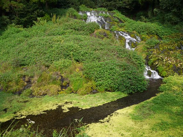 老野湧水の滝 (3)