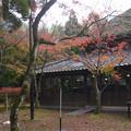 Photos: 金鱗湖 (4)