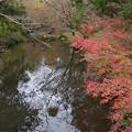 写真: 金鱗湖 (3)