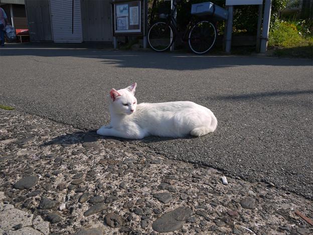 相島 (18)