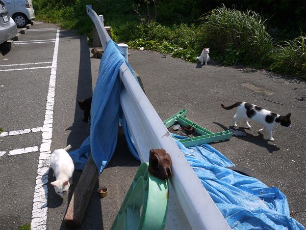 相島 (1) 新宮港のフェリー乗り場