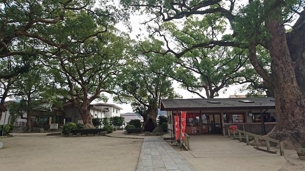 宇美八幡宮 (1)