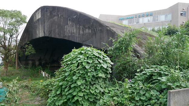 宮崎市本郷地区の掩体壕 3 (3)