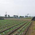 写真: 赤江飛行場の弾薬庫跡 (9)
