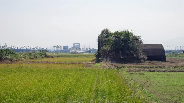 宮崎空港横の掩体壕 6号基 (4)