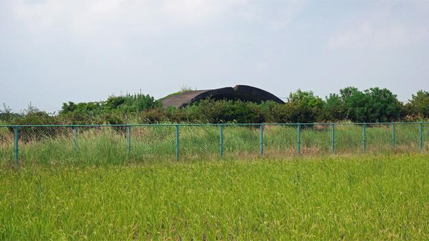 写真: 宮崎空港横の掩体壕 7号基 (5)