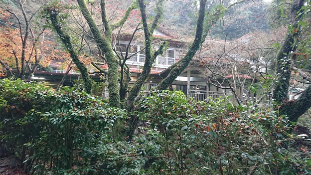 湯川内温泉 かじか荘 (6)