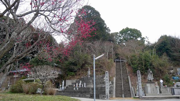 嘉麻市梅林公園 (2) 安国寺