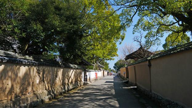 杵築 北台武家屋敷 (2)