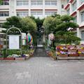 Photos: 城山小学校 (1)