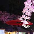 Photos: 夜のお花見