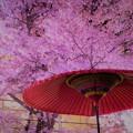 Photos: 夜のお花見 (2)