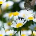 Photos: 隣の芝生は・・・