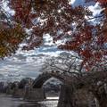 写真: 晩秋のアーチ
