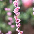 Photos: 春は花粉とともに
