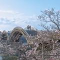 Photos: 春を渡る