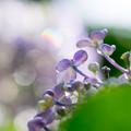 紫光の一日