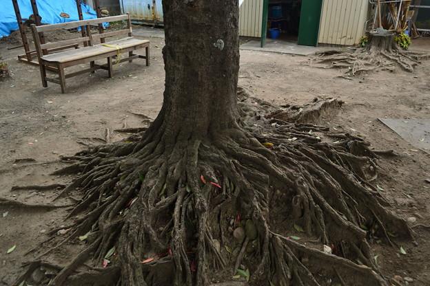 ネット裏の木
