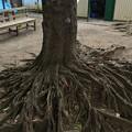Photos: ネット裏の木