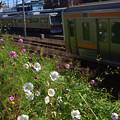 JR東海道線と静鉄とコスモス
