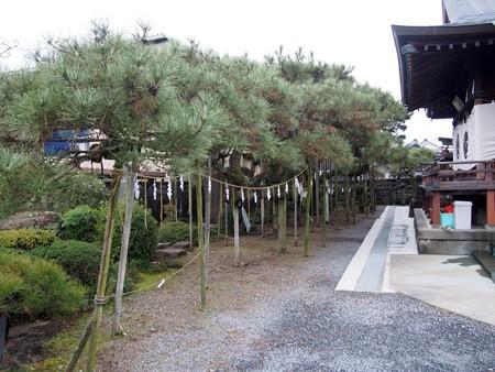 yasakajinja_murakumonomatu10