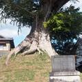 nomuraitiriduka02
