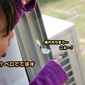 Photos: モンシロチョウとみっちゃん