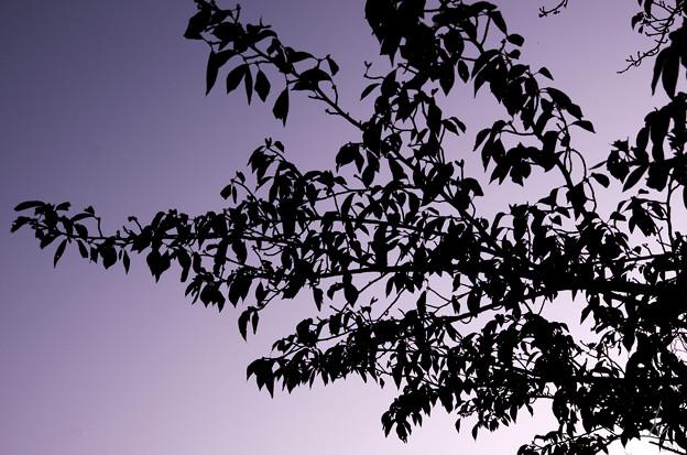 紫がかった空の下