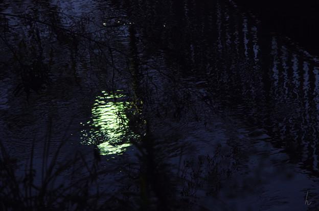 写真: 明かりを反映する