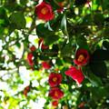 写真: 光と緑の世界に咲く