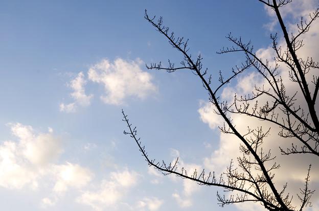 実や葉は付かずも枝を伸ばす
