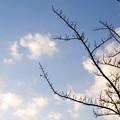 写真: 実や葉は付かずも枝を伸ばす