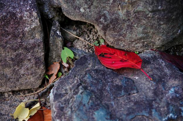 石の上に舞い落ちる赤色の葉