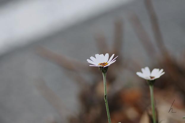 写真: 寒さからの春の息吹